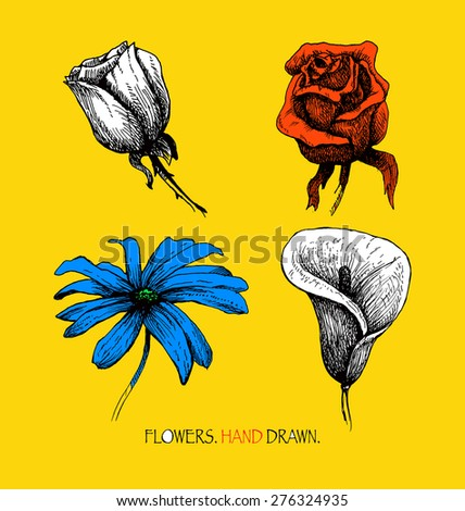 Flower set. Highly detailed hand drawn vector - stock vector