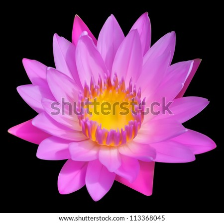 Flower vector icon, blossom of water lily. Exotic tropical plant Lotus. - stock vector