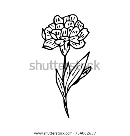 Flower Vector Illustration Birthday Card Hand Drawing Floral Art With Element