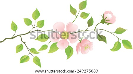 Flowering peach branches. Vector illustration. - stock vector