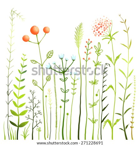 Flowers and Grass on White Grassland Collection. Rustic colorful meadow growth illustration set. Vector EPS10. - stock vector