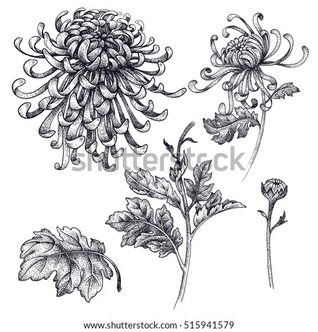 Flower Engraving Stock Images, Royalty-Free Images & Vectors | Shutterstock