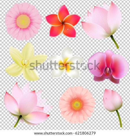 Flowers Collection In Transparent Background Gradient Mesh, Vector Illustration