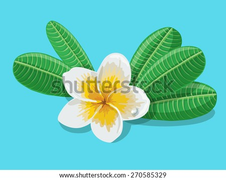 Flowers frangipani (Plumeria) with leafs on blue background. Vector illustration. - stock vector