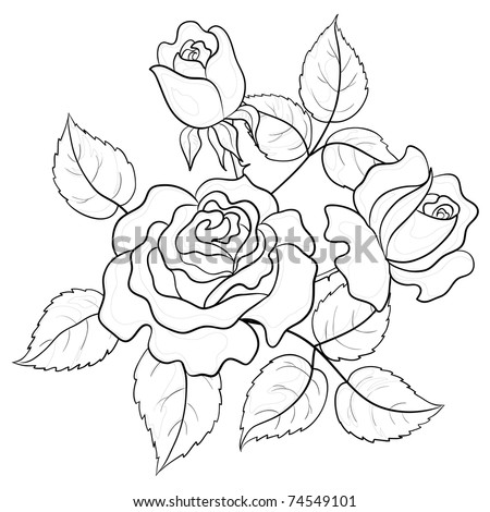 Flowers roses, vector, buds and leaves, graphic monochrome contours