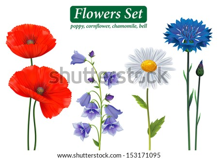 Flowers Selection Isolated on White Background. Poppy, cornflower, chamomile, bell. - stock vector