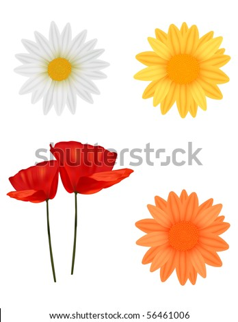 Flowers. Vector. - stock vector