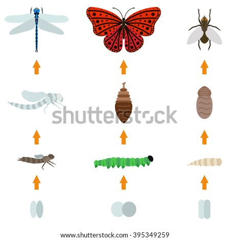 Fly, dragonfly, butterfly emerging from chrysalis four stages amazing moment about bugs change insect birth life vector. Insect birth transmogrify life and insect life creature metamorphose spring. - stock vector