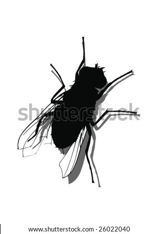 Fly On The Wall -Vector Art-