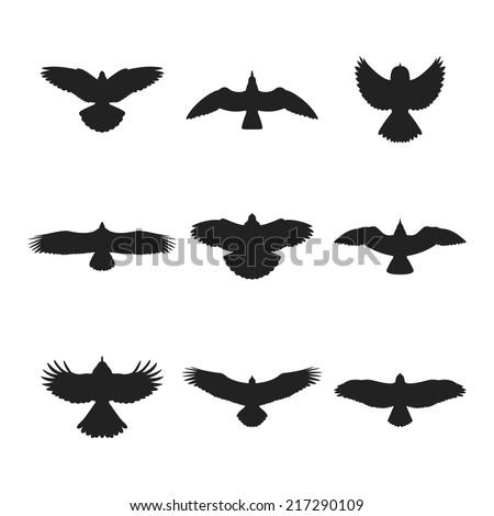 Flying bird like eagle sparrow dove pigeon sea gull or hawk silhouettes set - stock vector