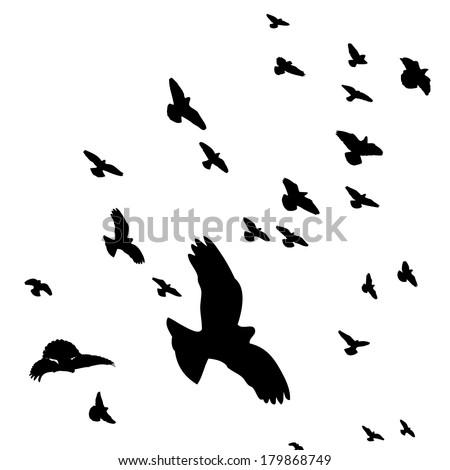 Stock Vector Flock Of Birds Silhouette