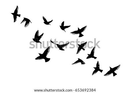 flying birds sky vector stock photo photo vector illustration rh shutterstock com victor bird victor bird