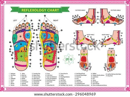 biểu đồ bấm huyệt bàn chân với mô tả chính xác các bộ phận trong cơ thể và tương ứng.  Vector hình minh họa trên nền trắng, bị cô lập.