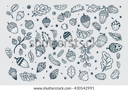 Forest autumn collection. Ornamental Acorns and oak leaves vector set. Hand drawn doodle acorn, leaf, oak - vector illustration - stock vector