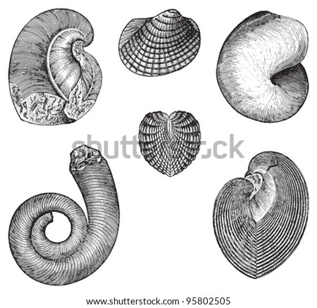 Fossils (Silurian and Cambrian period) / vintage illustration from Meyers Konversations-Lexikon 1897 - stock vector