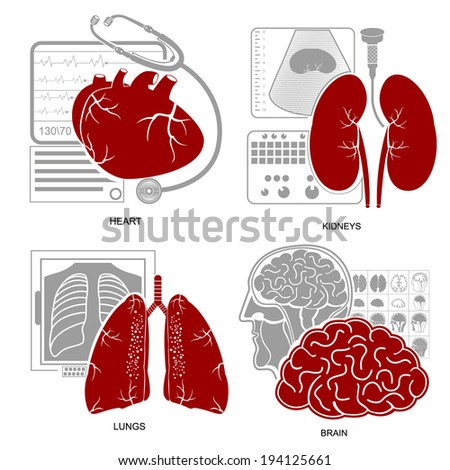 Four flat design medicine icon heart lungs brain kidneys and their diagnostic equipments - stock vector