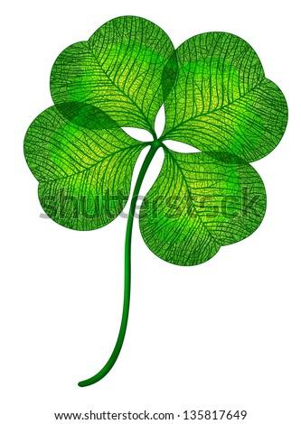 Four leaf clover isolated. Vector, EPS 10 - stock vector