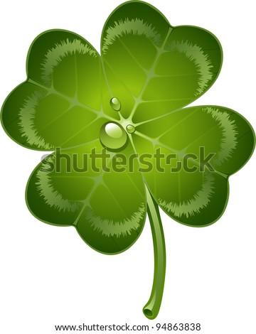 Four-leaf clover over white - stock vector