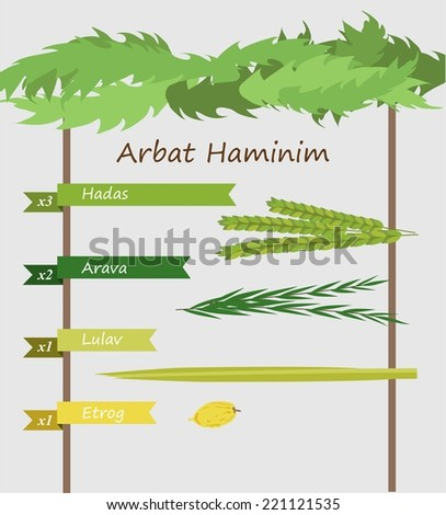 Four species - palm, willow, myrtle , lemon (arava, lulav, hadas and etrog in hebrew) - symbols of Jewish holiday Sukkot. Vector illustration , Infographics - stock vector