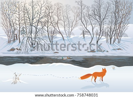 Fox in the winter forest hunting a duck