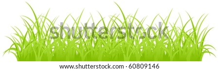 Fragment of a green grass. Vector illustration, isolated on a white. - stock vector