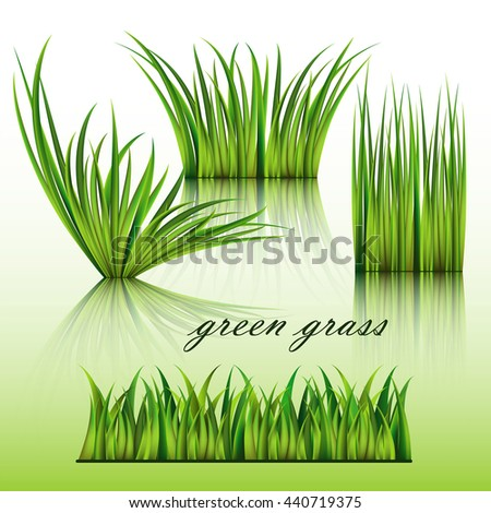 Fragments of the green grass isolated on green background. Vector illustration. - stock vector