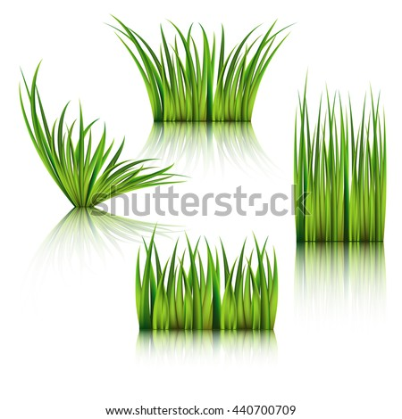 Fragments of the green grass isolated on white. Vector illustration. - stock vector