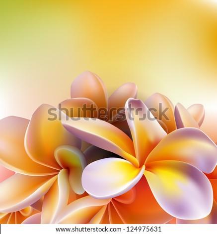 Frangipani flowers - stock vector