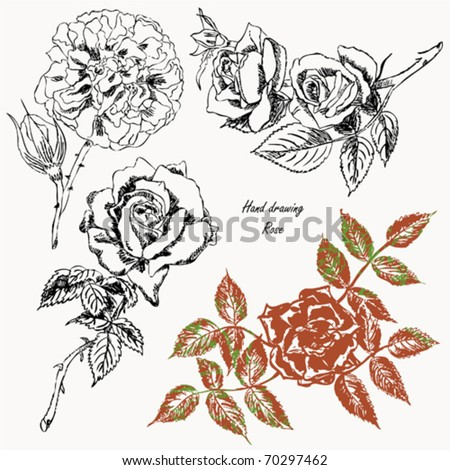 Freehand drawing - rose