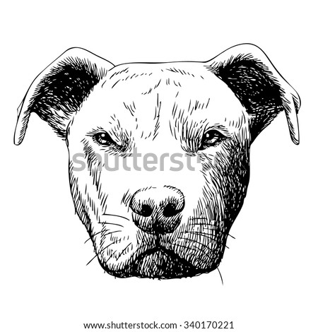 freehand sketch illustration of American Pit Bull Terrier, American Staffordshire Terrier, and Staffordshire Bull Terrier dog , doodle hand drawn - stock vector