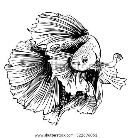 Betta Fish Stock Images Royalty-Free Images U0026 Vectors | Shutterstock