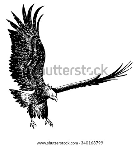 freehand sketch illustration of flying, fighting eagle hand drawn on white background - stock vector