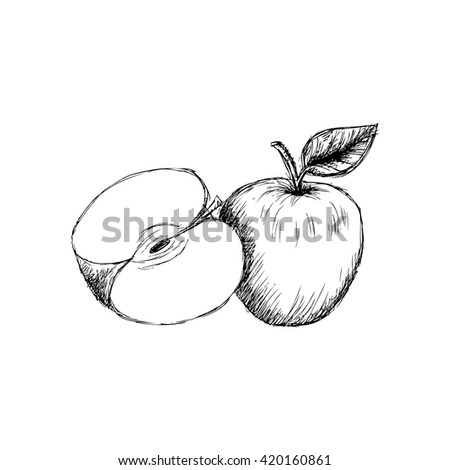 Fresh apple with leaf and slice. Sketchy style. - stock vector