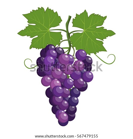 Fresh bunch of grapes purple icon on white background. vector illustration in flat style