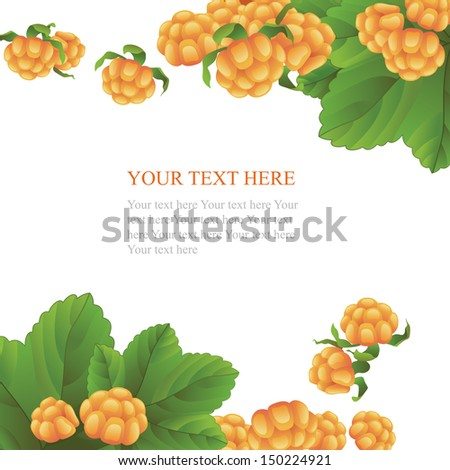 Fresh cloudberry on white background - stock vector