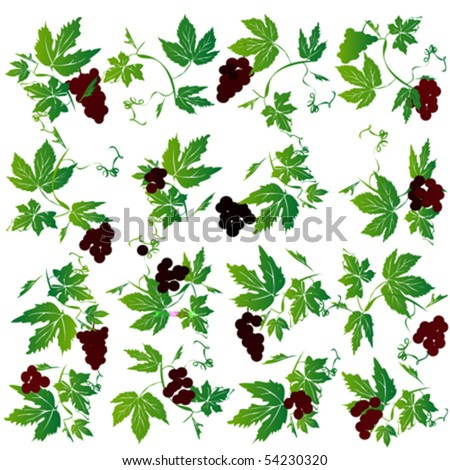 Fresh grapes set for menus and wed web - stock vector