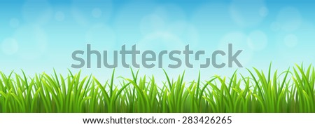 Fresh green grass background with blue sky - stock vector