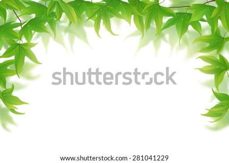 Fresh green maple leaves on white background, vector illustration - stock vector