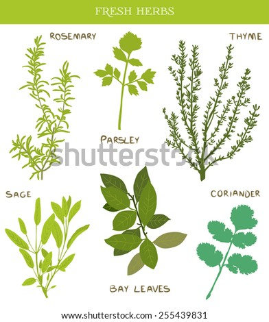 Fresh herbs - stock vector
