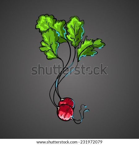 fresh radish - stock vector