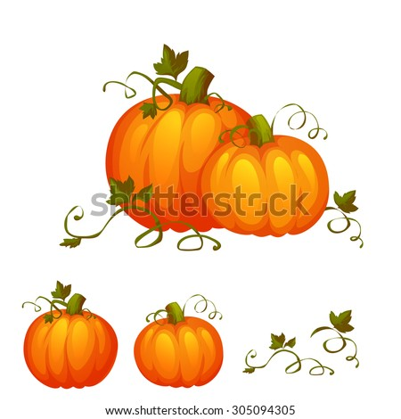 Fresh two pumpkin with sweet green leafs. - stock vector