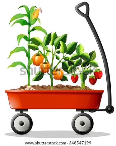 Fresh vegetables and fruits in the cart illustration - stock vector