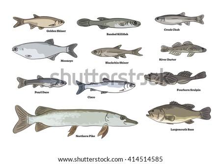 Freshwater River Fish