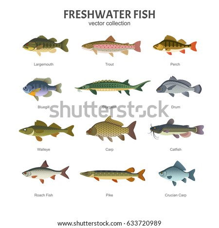 Different kinds of fish to eat images for Freshwater fish to eat
