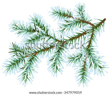 Frozen fir branch. Isolated on white vector illustration