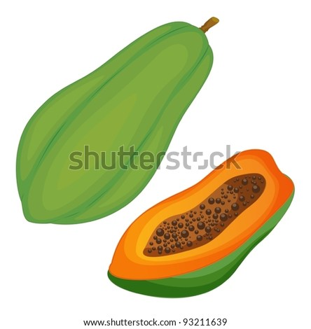 Fruit illustration on white background