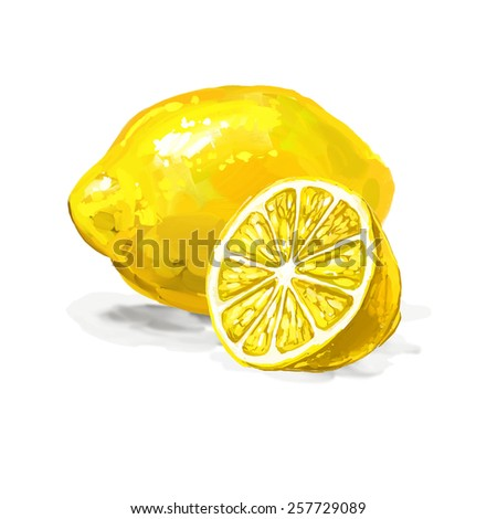fruit lemon Vector illustration  hand drawn  painted watercolor  - stock vector