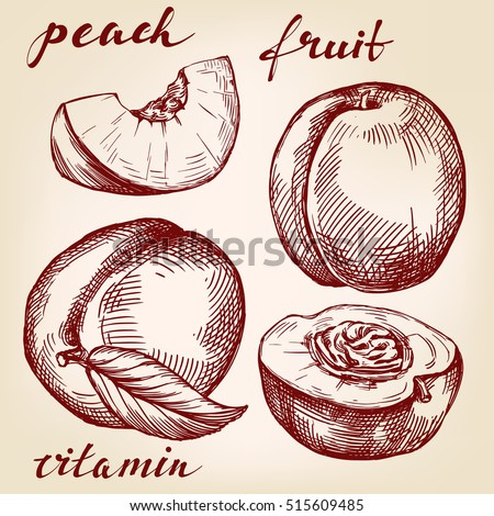 fruit peach set hand drawn vector llustration realistic sketch