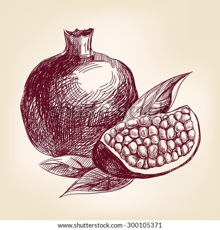 fruit pomegranate hand drawn vector llustration realistic sketch - stock vector