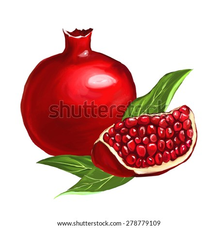 fruit pomegranate vector illustration  hand drawn  painted watercol - stock vector